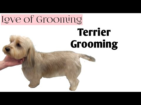 Finding Terrier Mix Dogs Haircuts