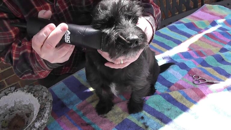 What to Do With a Scruffy Dog Haircut