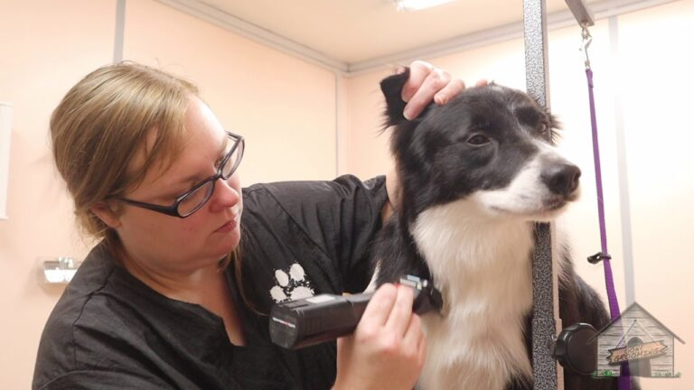 Grooming Tips For Your Border Collie Dog