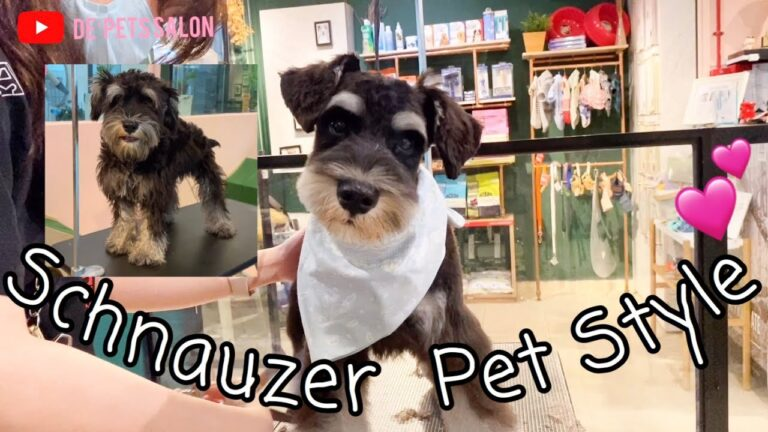 Everything You Need to Know About Dog Grooming Styles