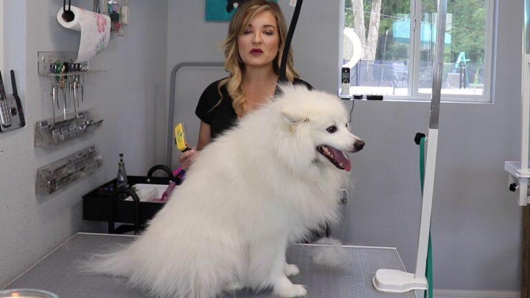 How to Cut a Professional American Eskimo Dog Hair Cut