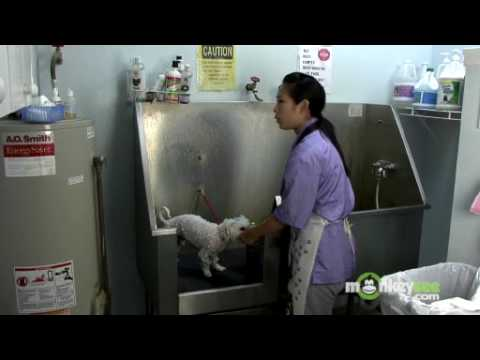 Dog Grooming Tips to Save You Money