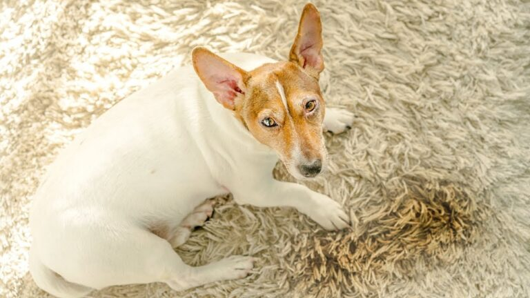 What Can I Spray to Keep My Dog From Peeing in the House?