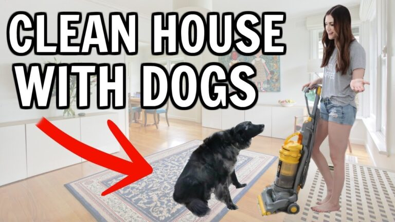 Dog Cleaning Tips – Why Dogs Have a Hard Time Vomiting
