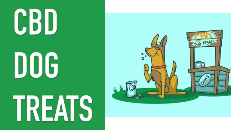 Finding the Right CBD Dog Treats For Your Dog