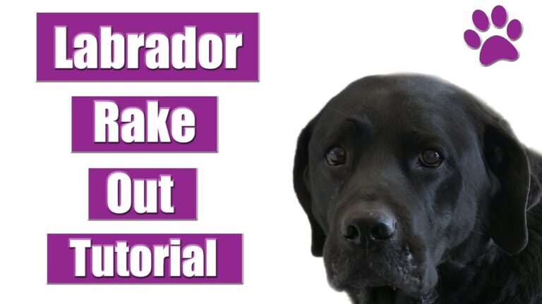Dog Grooming Tips For Labradors
