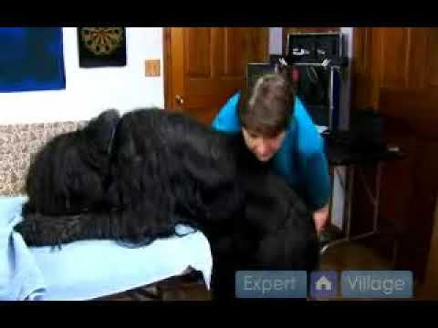 Dog Grooming Table – It Is A Must For Grooming Your Pets