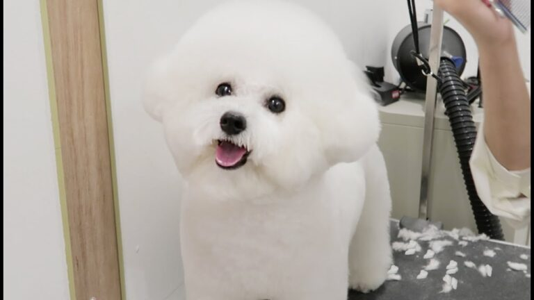 Top 10 Popular Korean Dog Cut and Hairstyles