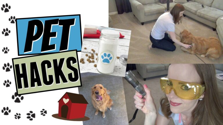 Dog Cleaning Hacks That Actually Work