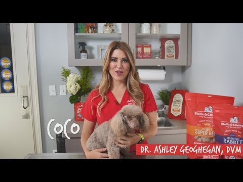 What You Need To Know About Dog Food Allergy Symptoms