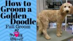 Choosing the Right Cut For Your Dog's Coat